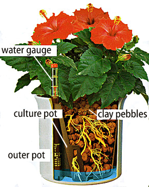 Hydroponic herbs - diagram of hydroponic system