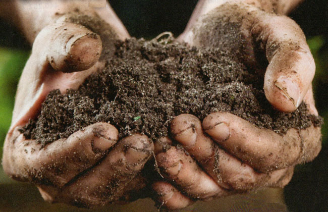 Get rid of soil - time for hydroponics