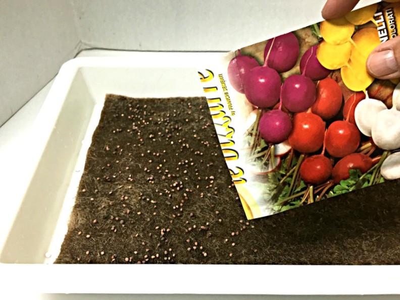 Growing microgreens - sowing seeds.