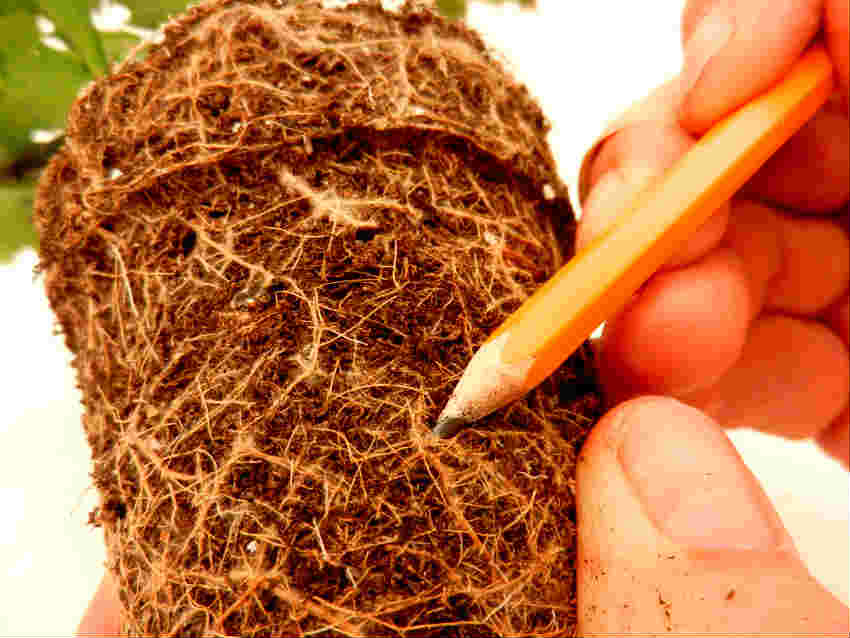 3 notice delicate root structure for these plants